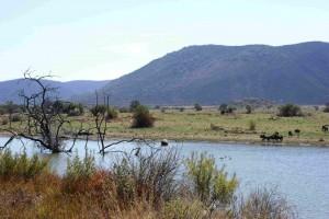 P Pilanesberg Nas Park